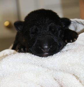 18-pup-first-bath